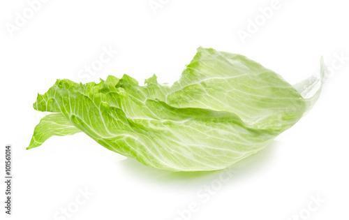 Stampa su Tela Leaf of Iceberg lettuce