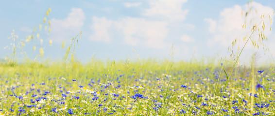 FototapetaWiese mit Blumen im Sommer