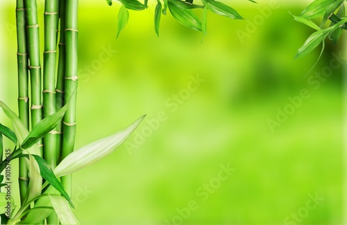 Photo sur Aluminium Bamboo Bamboo.