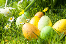 œufs De Pâques Colorés Cachés Dans Le Jardin Entre Les Fleurs Et L'herbe