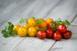 Stack of mixed cherry tomatoes orange, yellow and red with fresh herbs on a wooden background