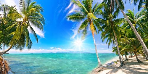Photo  Karibischer Traumstrand mit Palmen :)