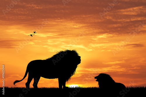 Fototapety, obrazy: lion silhouette at sunset