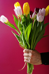 bunch of tulips in man hand