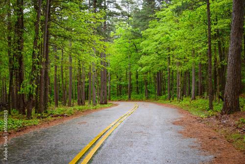 Fotografia, Obraz  Talimena Scenic Drive