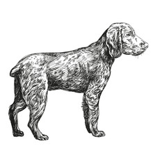 Dog Hunting Hand Drawn Vector Llustration Realistic Sketch
