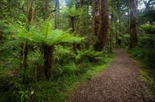 Walking Trail In New Zealand S...