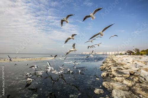 Photo  Deniz Martı Ve Şehir
