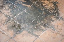 Mildewed Tiled Floor