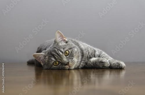 Foto op Aluminium Kat sick cat on a table with medicines