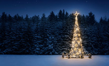 Illuminated Christmas Tree In ...