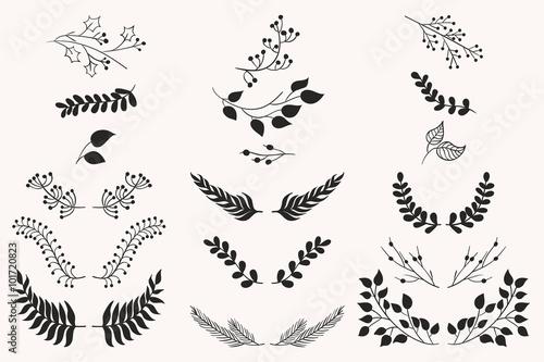 Fotografía  Set of vector vintage floral elements.