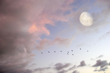 Moon Clouds Skies Birds Silhou...