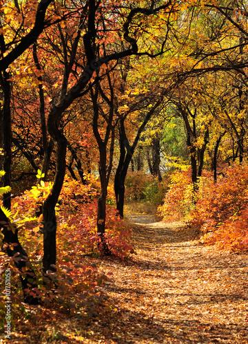 Photo  trail