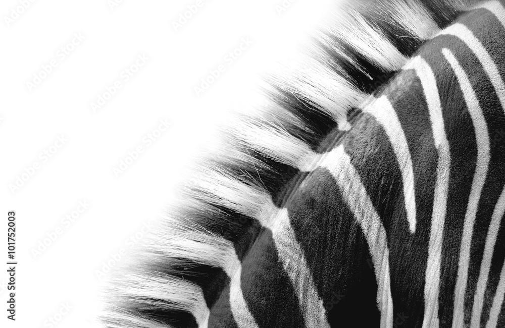 Fototapety, obrazy: zebra neck detail