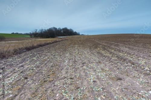Fotobehang Grijs Early spring landscape of fields under cloudy sky