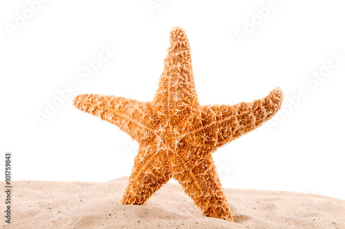 sea star is on the sand on the white