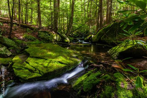 Photo  Mossy creek in the Catskills