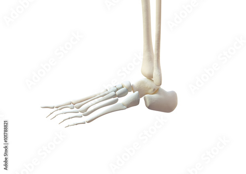 Fuß Knochen Anatomie Links - Buy this stock illustration and explore ...