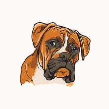 Boxer Dog Vector Illustration