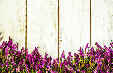 FototapetaPurple heather flowers on rustic wooden planks. Flowers rustic background.