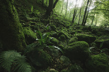 Natural Green Forest With Moss And Lush Vegetation