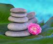 piedras y flores con un fondo azul cielo