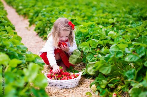 Fototapety, obrazy: Little girl picking strawberry on a farm field