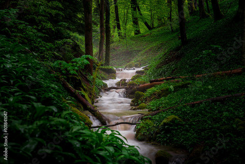 Wall Murals Forest Spring Green Forest