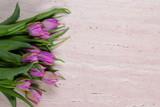 Fototapeta Kamienie - Tulipany