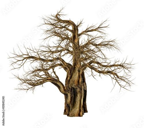 Photo Baobab tree without leaves, adansonia digitata - 3D render