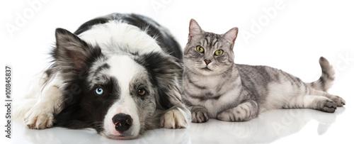 Papel de parede Hund und Katze