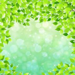 Fototapeta新緑の葉に囲まれキラキラした背景