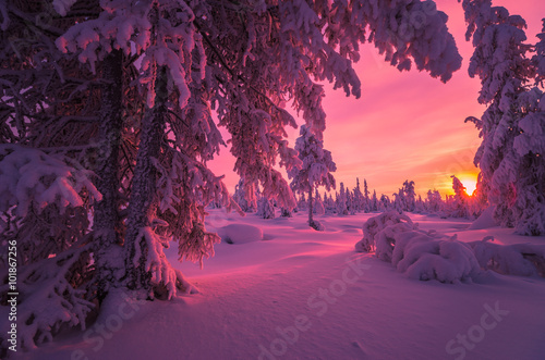 Spoed Foto op Canvas Aubergine Winter Evening Landscape with forest, cliffs, sunset and cloudy sky
