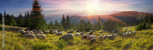 Spoed Fotobehang Schapen Shepherds and sheep Carpathians