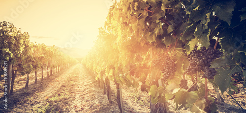 Tuinposter Wijngaard Vineyard in Tuscany, Italy. Wine farm at sunset. Vintage