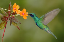 Green And Blue Hummingbird Spa...