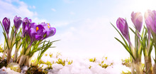 Art Spring Flower  Background