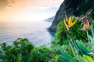 Panel Szklany Liście Strelitzia blooming on Madeira, Portugal