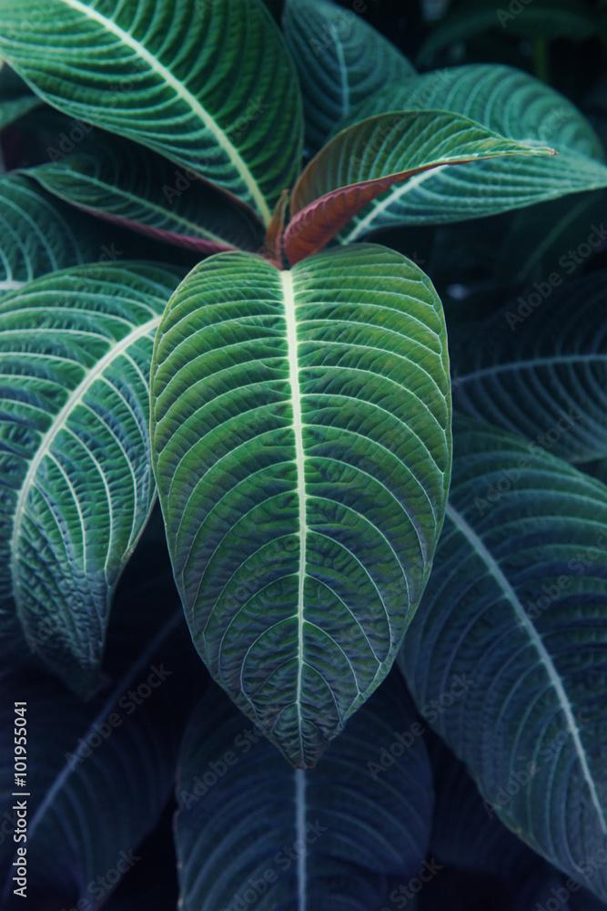 Fototapety, obrazy: 熱帯植物