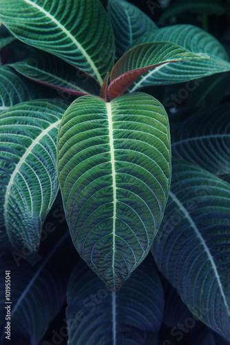 Fotografie, Obraz  熱帯植物