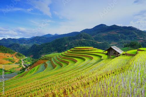 Garden Poster Rice fields Rice fields on terrace in rainy season at Mu Cang Chai, Yen Bai, Vietnam.