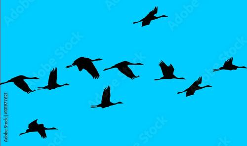 Foto op Canvas Draw flock of birds in a blue sky