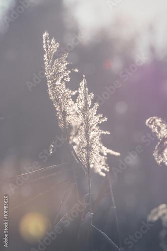 suchej-trawy-w-okresie-wiosennym-polska