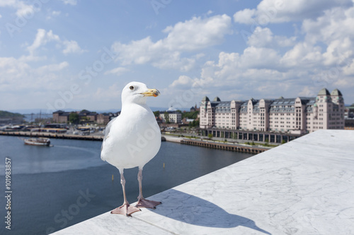 Photo  Seagull on opera house in Oslo, Norway