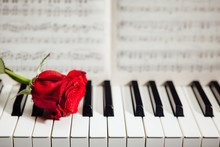 Red Rose On Piano Keys And Mus...