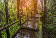 Wooden Bridge In Tropical Rain...
