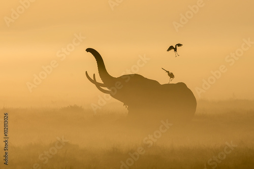 African Elephant in the morning mist at sunrise in Amboseli, Kenya Canvas