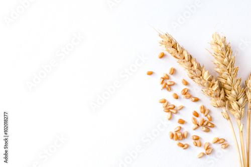 Fotomural Golden ripe wheat on white background