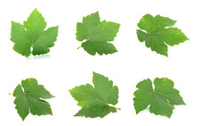 Grape Leaf Isolated On The Whi...